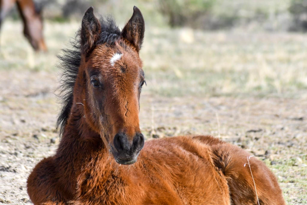 A baby foal enjoys the warmth of the sun. (Nikki Dorber / The Signpost)