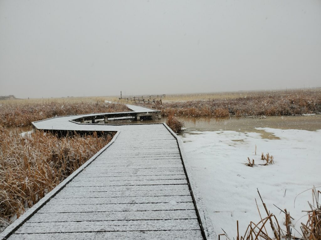 A snow covered bridge located at the Great Salt Lake Shorelands Preserve. The preserve is a bird refuge located in the wetlands just off the Great Salt Lake in Layton, Utah. (Sarah Earnshaw/ The Signpost)